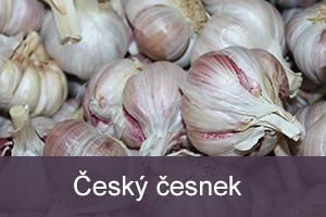 cesky_cesnek